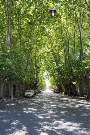 Tree-lined avenue at Colonia del Sacramento in Uruguay