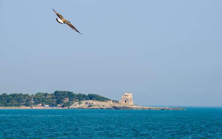 Bird flying on the coast at the tower ruin near Vieste on Puglia, Italy Standard-Bild