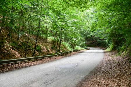 Street on Umbra Forest at Gargano, Italy