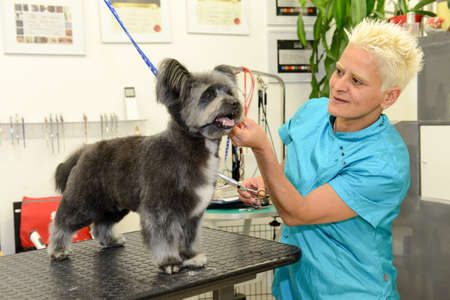 Lugano, Switzerland - 17 april 2016: Canine hairdresser in a beauty clinic with dog