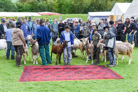 bleating: Stans, Switzerland - 2 October 2016: People watching and discussing at the goats market of Stans on the Swiss alps