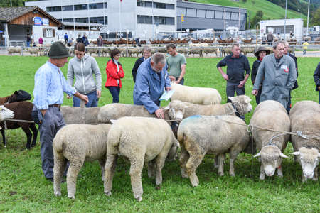 bleating: Stans, Switzerland - 2 October 2016: People watching and discussing at the sheep market of Stans on the Swiss alps