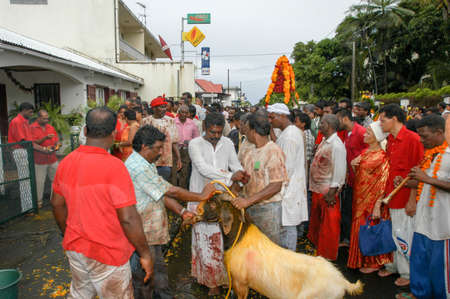 Saint Andre (La Reunion), France - 2 January 2003: people making a sacrifice of a goat during the hindu celebration of Pandiale at Saint Andre on La Reunion island, France