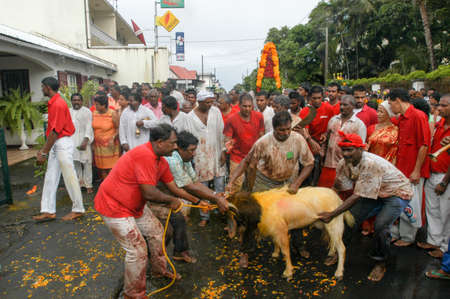 sacrificio: Saint Andre (La Reunion), France - 2 January 2003: people making a sacrifice of a goat during the hindu celebration of Pandiale at Saint Andre on La Reunion island, France