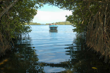 Bentota, Sri Lanka - 23 December 2004: Tourists navigating with a motorboat to discover the nature of the mangroves of Bentota in Sri Lanka