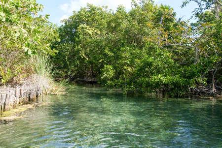 The lagoon of Ojo at Holbox island, Mexico