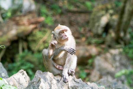 Monkey at Phuket island on Thailand Stock Photo