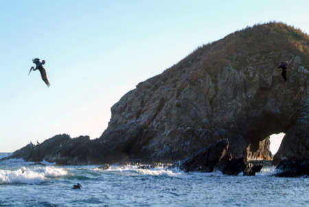 rock formation: Brown Pelican diving into the water for fish at Zipolite on Oaxaca, Mexico
