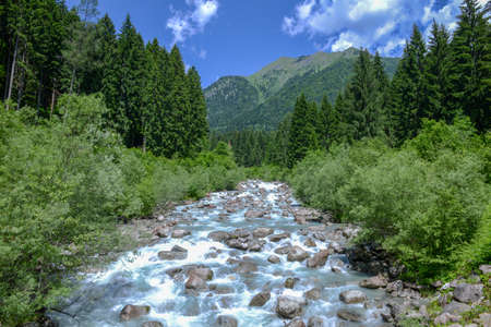 River flowing in the forest in the Adamello Brenta Natural Park, Dolomites, Italy