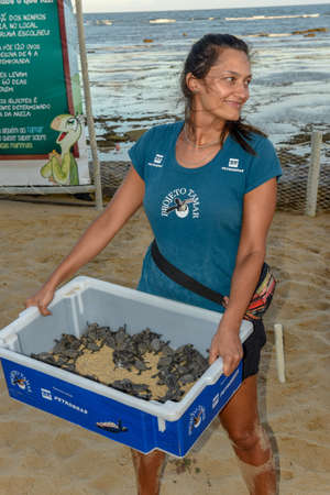 Praia do Forte, Brazil - 31 January 2019: animalist collaborators during the collection of newborn turtles on Tamar project at Praia do Forte in Brazil