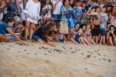 Praia do Forte, Brazil - 31 January 2019: people observing baby turtles on Tamar project at Praia do Forte in Brazil
