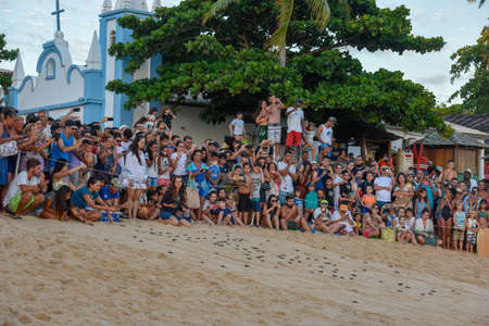 Praia do Forte, Brazil - 31 January 2019: people observing baby turtles making it's way to the ocean on Tamar project at Praia do Forte in Brazil