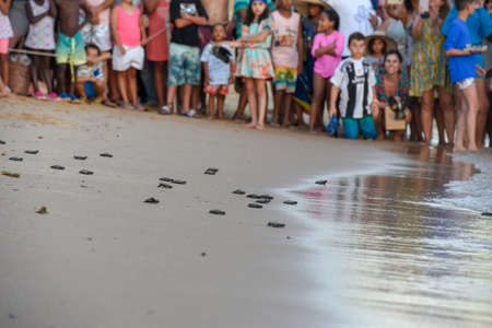 Praia do Forte, Brazil - people observing baby turtles making its way to the ocean on Tamar project at Praia do Forte in Brazil 版權商用圖片