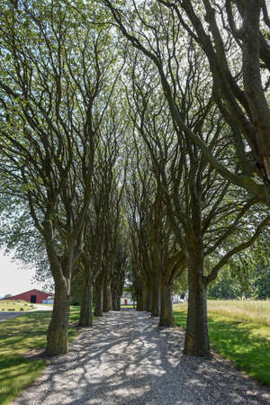 Tree-lined avenue at Udshold on Denmark