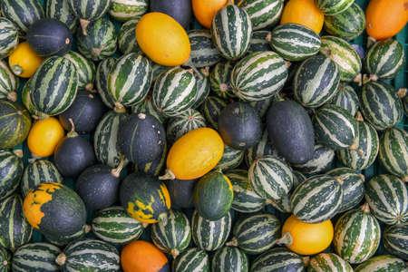 Colorful pumpkin and marrow at autumnal market