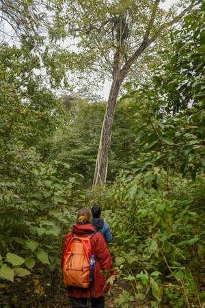 Chitwan, Nepal - 21 January 2020: tourists on a safari walk at Chitwan national park on Nepal