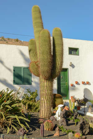 Traditional house with cactus garden at Femes on Lanzarote in the Canary islands, Spain