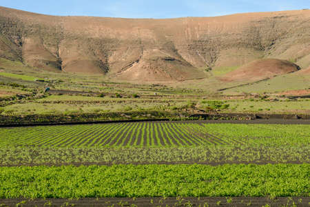 Agricultural cultivation on volcanic soil at Lanzarote in the canary islands, Spain Stock fotó