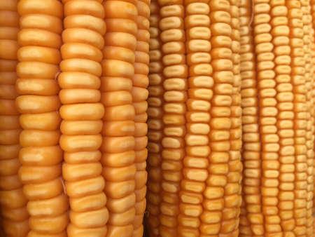 closeup: Closeup dried corn