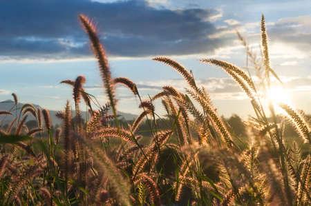 abstrakte muster: Gr�nland am Morgen Sonnenaufgang Lizenzfreie Bilder