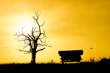 silhouetted: Sunrise with silhouetted tree,house