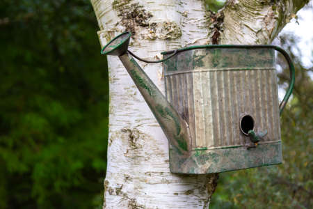 Birdhouse on the tree in the park Banque d'images