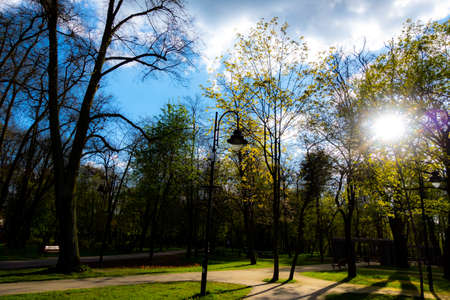 Rays of the sun shining through the treetops in the city park. The photo was taken in natural daylight.