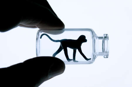little monkey as a symbol for animal testing and genetic engineering Stock Photo