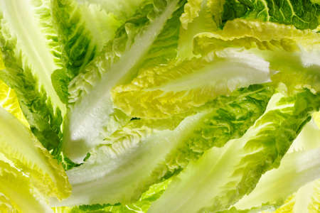 several bright lettuce leaves in the top view Stock Photo - 8667432