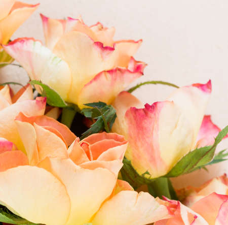 yellowed: Blooming orange, yellow and red roses against a yellowed paper background