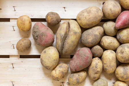 unboiled: Fresh organic potatoes arranged in a wooden box as a natural still life for healthy and vegetarian food