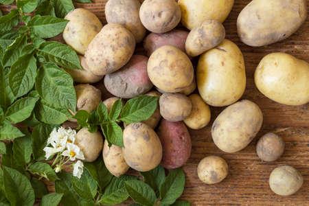 vida natural: Las patatas orgánicas con hojas verdes frescas en la madera como una naturaleza muerta naturales para la alimentación sana y vegetariana Foto de archivo
