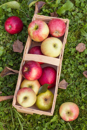 Fresh organic apples in a wooden basket