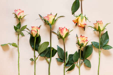 Seven blooming roses arranged in a row on yellowed paper, one of them headfirst - tender top view background image