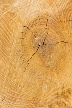 Weathered slice of a tree with a cracked wood knot as a natural wooden background