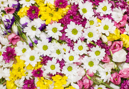 Different flowers arranged as a colorful natural background image with white, yellow and pink blossoms