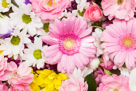 Gerbera and chrysanthemum - colorful flowers as a natural background. Stock photography gerbera and colorful flowers as a background