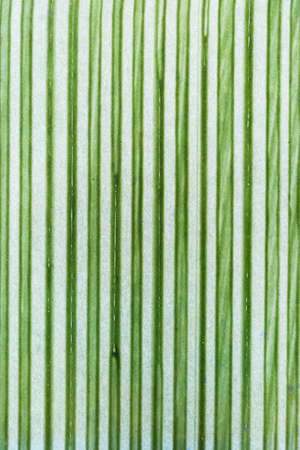 Abstract pattern - green stripes