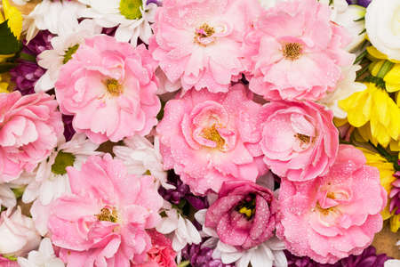 Wild roses and chrysanthemum - a colorful bunch of flowers in a white background Stock Photo