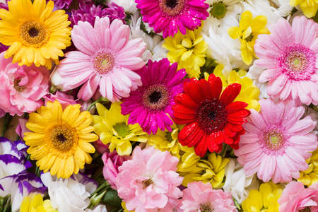 Gerbera and other colorful flowers as a background with white, yellow and red blossoms Stock Photo