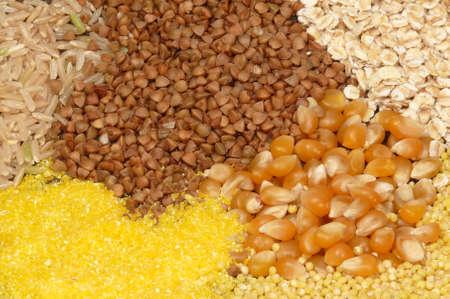 Corn grains photo