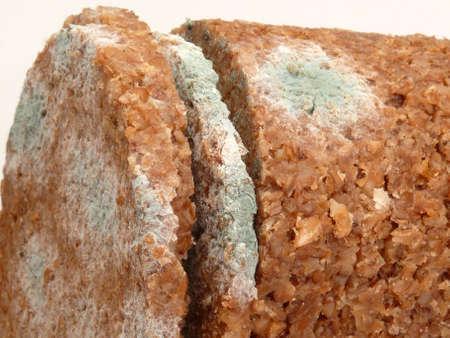 bread mold: mold fungus in bread Stock Photo