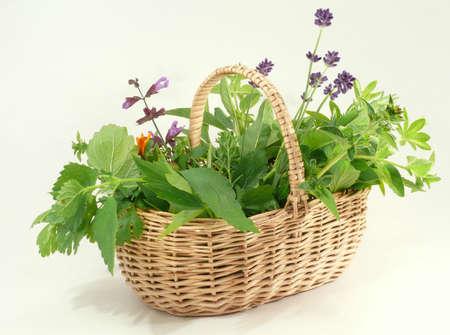 garden herbs Stock Photo - 4292282