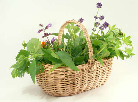 garden herbs Standard-Bild