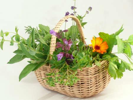 many herbs photo