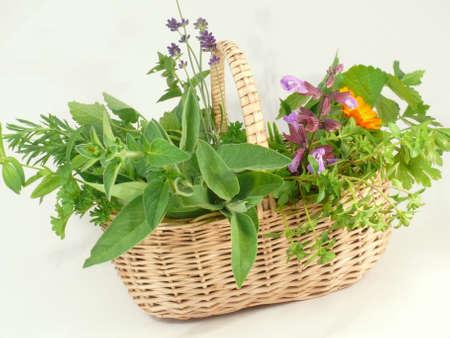 Gartenkräutern Standard-Bild - 4292292