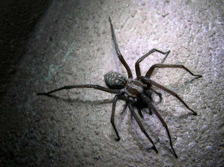 spider in the night photo