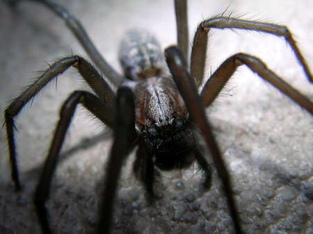 spider in the night Stock Photo - 4565786