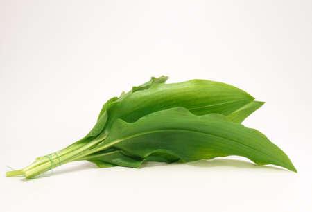 Mit Allium Standard-Bild - 4724811