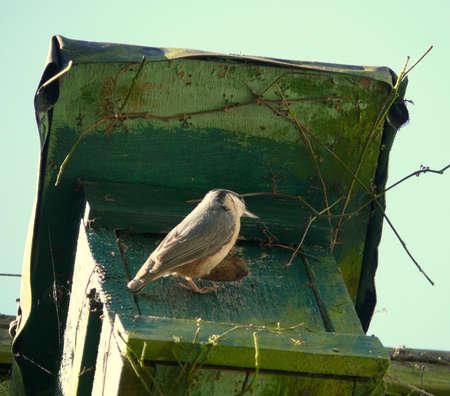 woodpecker photo